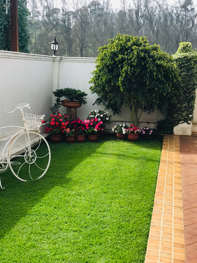 Side garden with lush real grass